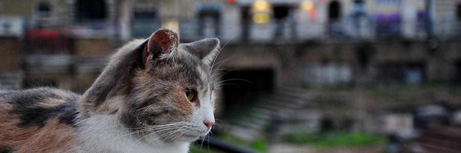 prova-gatto